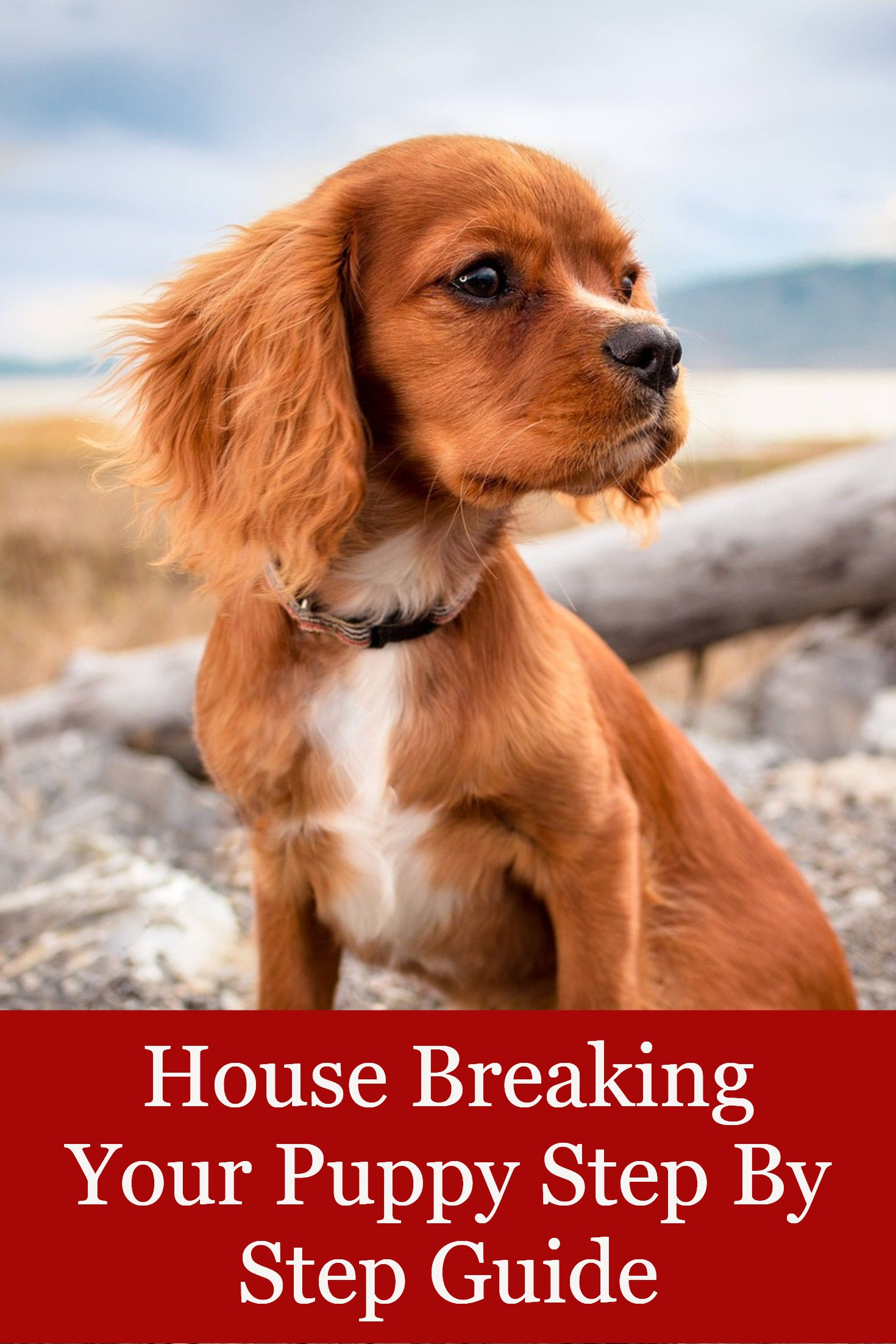 House Breaking Your Puppy Step By Step Guide Dog Training Dog