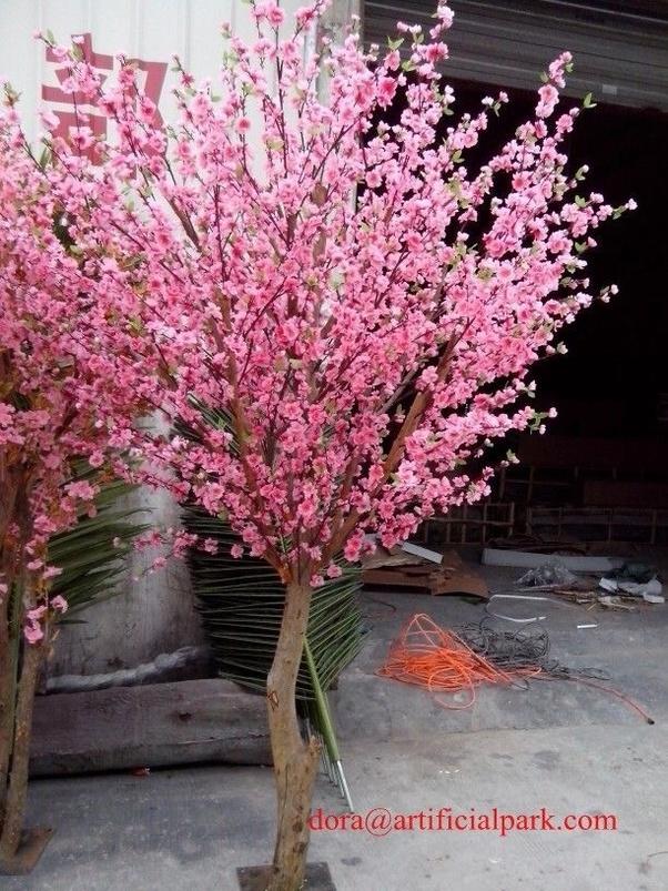 What Type Of Trees Are Pink Quora Flor De Cerejeira Decoracao Decoracao Com Galhos Secos E Flores Arvore Francesa