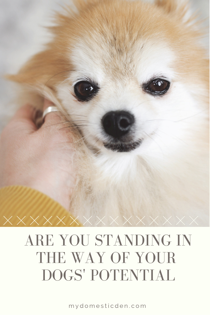 are you standing in the way of your dogs' confidence