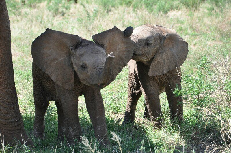 Baby elephants are just so cool!