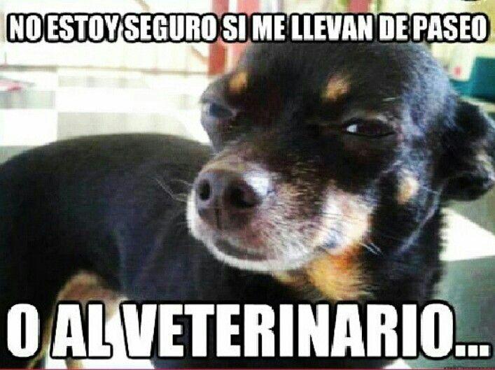 Perrito Desconfiado Memes Perros Memes De Perros Chistosos Perros Chistosos