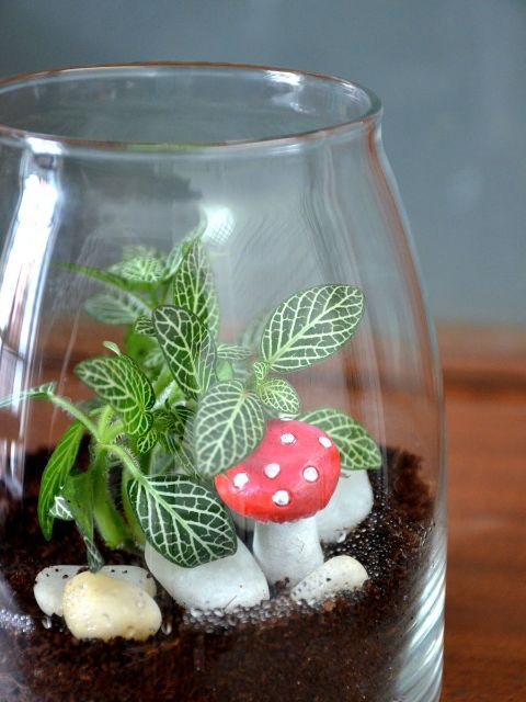 Jar Terrarium Shop Online For Plants Bangalore India Jar