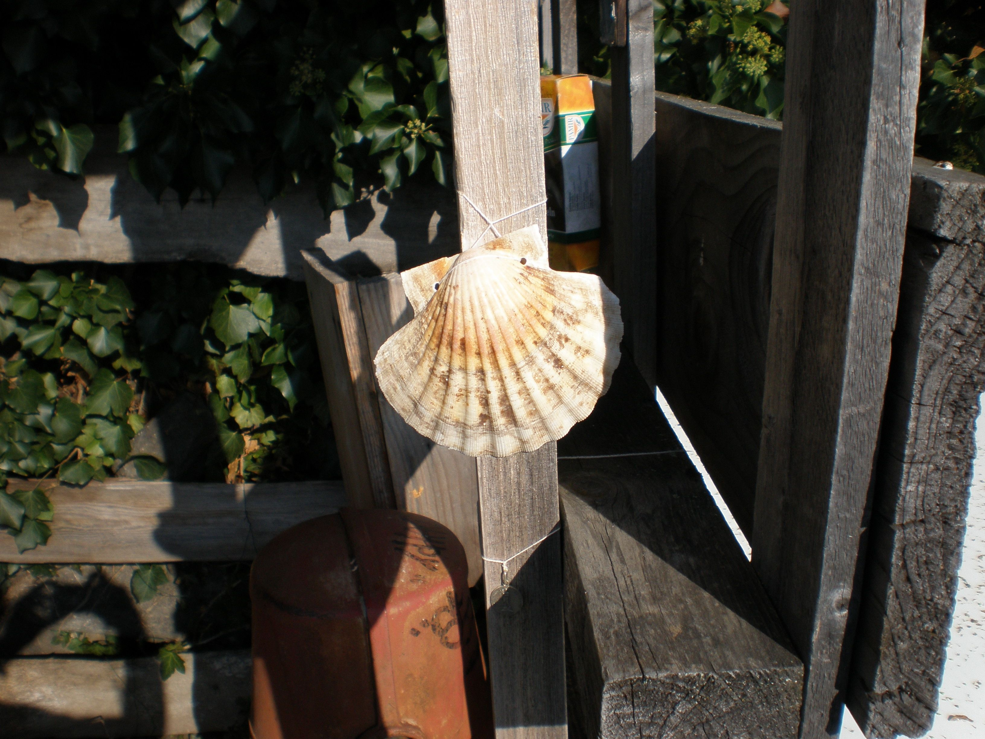 The Scallop Shell One Of The Iconic Symbols Of This Walk The