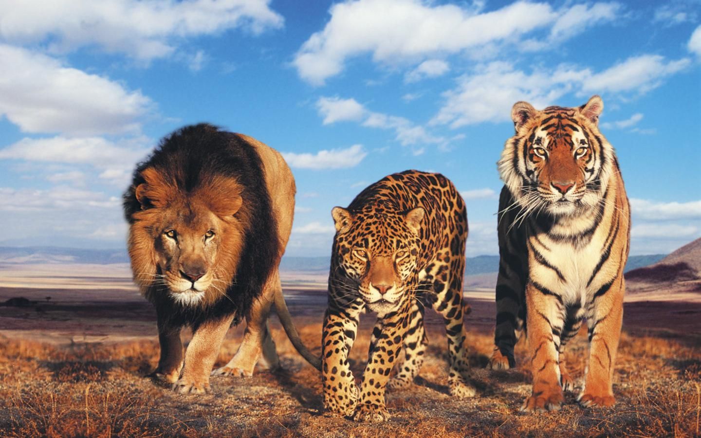 Glowing Lion and Tiger HD desktop wallpaper : High Definition : Mobile | Images Wallpapers ...