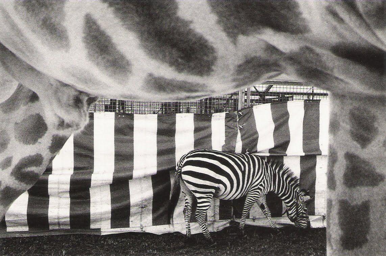 Mènagerie du Cirque Knie. Reinach. Suisse. 1990  Michel Vanden Eeckhoudt
