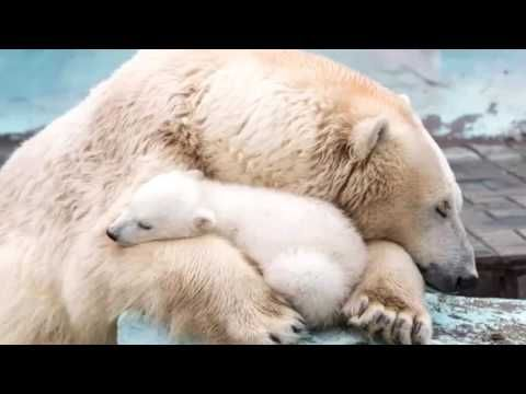BABY BEDTIME - LULLABY SONG, SLEEP  MUSIC FOR BABIES, RELAXING BABY MUSI...