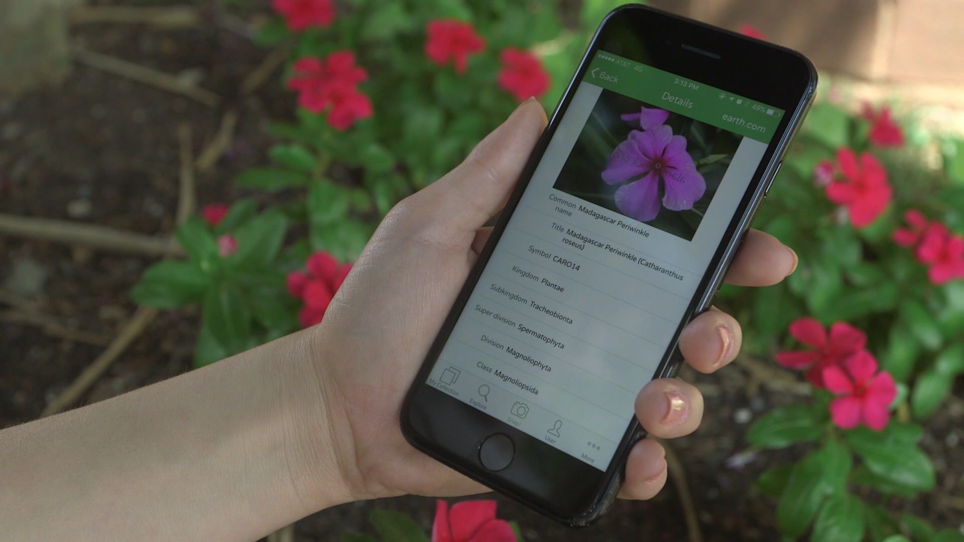 PlantSnap Identify Several Plant Species in a Snap