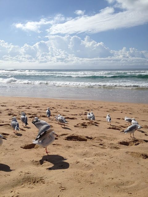 seagulls at the beach - Bing Images