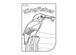 Kingfisher Colouring In Picture Let Your Child Colour This Lovely Kingfisher  To . Kingfisher Animal Coloring Pages. ...
