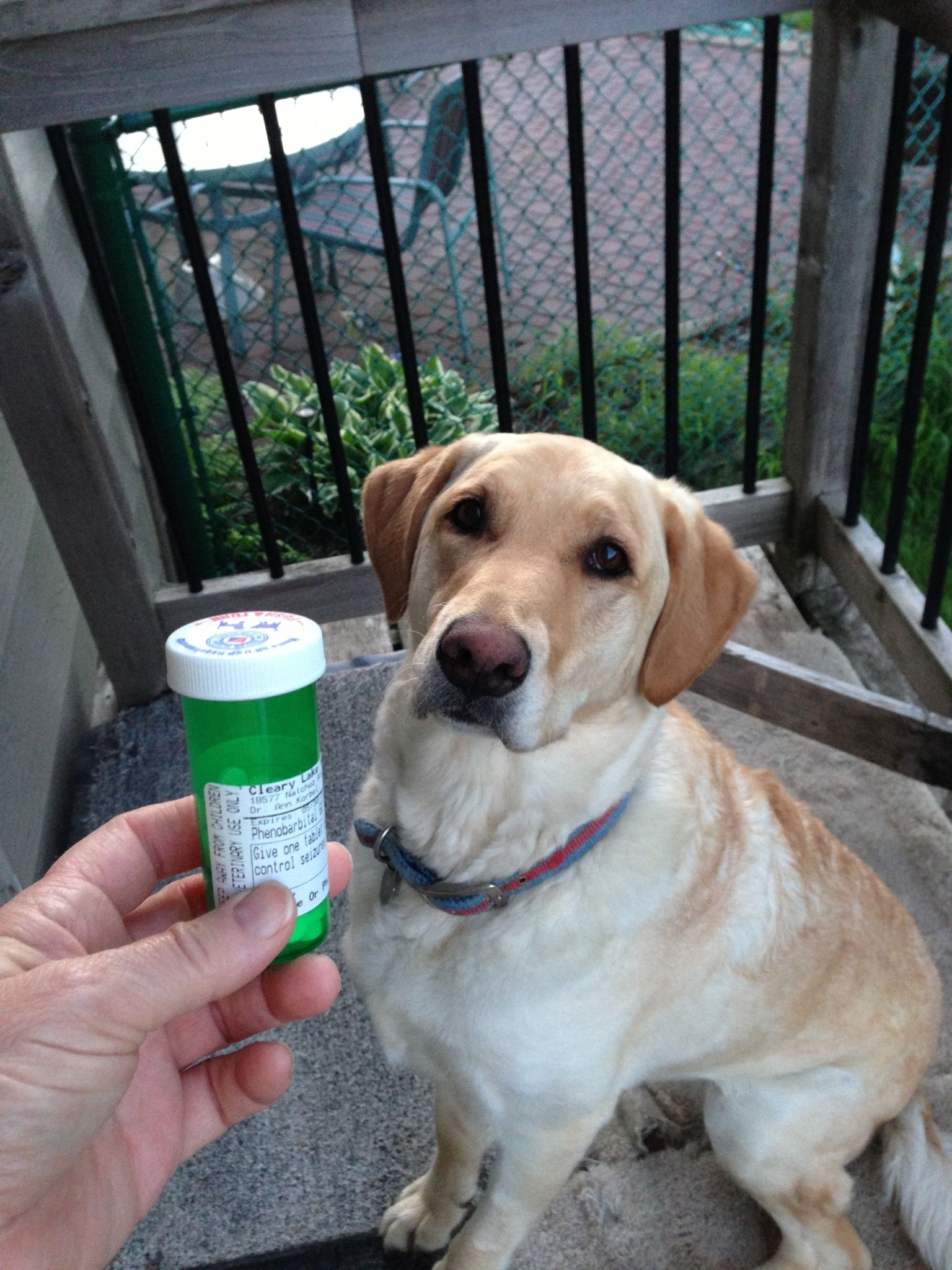 How to make your dog love to take pills recipe dogs