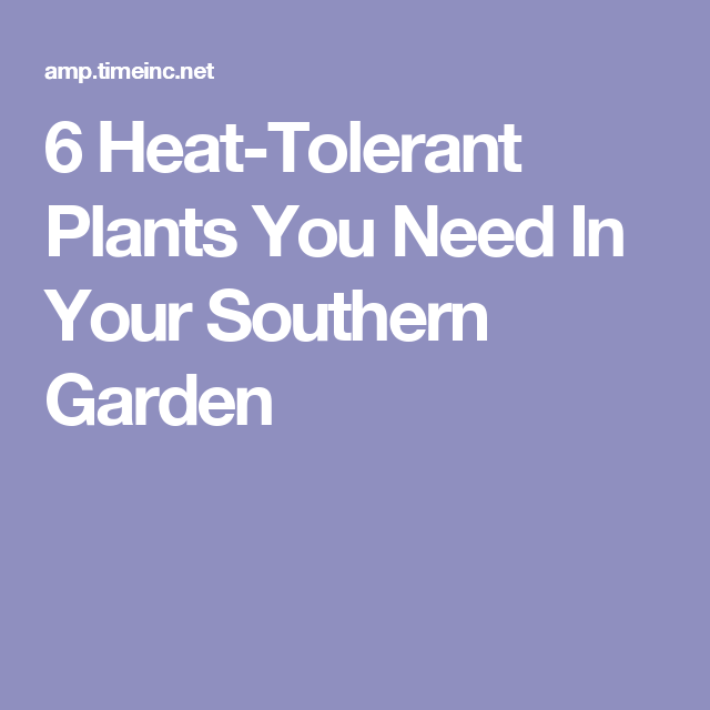 6 Heat Tolerant Plants You Need In Your Southern Garden