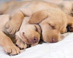 I Will Not Play Tug O War I D Rather Play Hug O War Where Everyone Hugs Instead Of Tugs Where Everyone Giggles And Rolls On The Rug Where Sleeping Puppies Sleeping