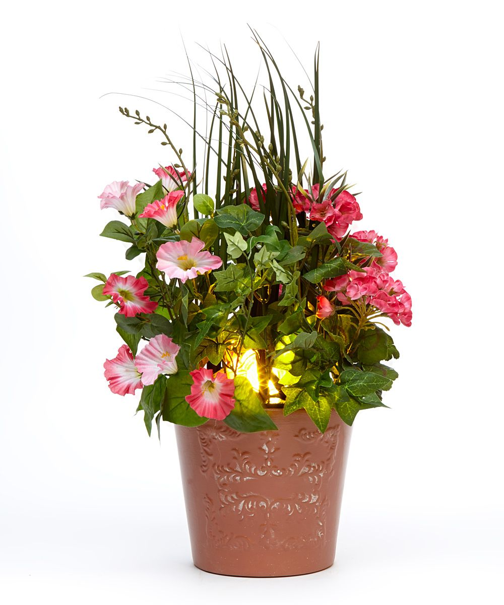 Pink Mixed Spring Flower Potted Arrangement Zulily Flower In All