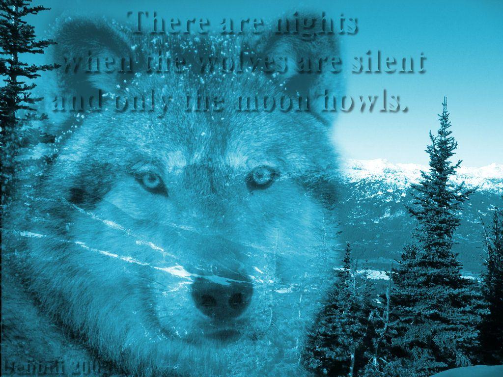 Wolf Desktop Background Pictures