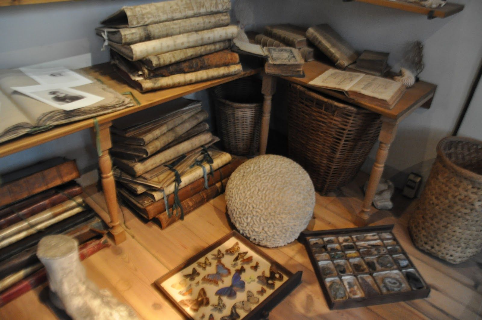archaeological cabinet - Google Search
