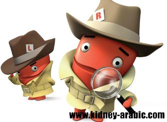علاج الأمراض الكلية ما هو زلال و البروتين في البول Creatinine Levels Renal Disease Kidney Disease Symptoms