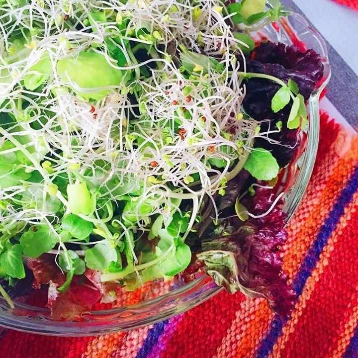 Esta fue nuestra ensalada fresca y cruda de ayer: lechuga morada y verde orgánica, berros, brotes de alfalfa y acom…