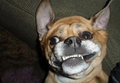 upside down dogs---too funny!
