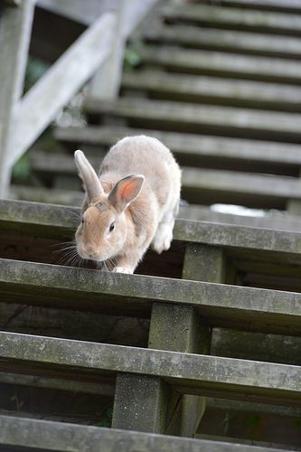 Okunoshima Island Animales Graciosos Mascotas Animales