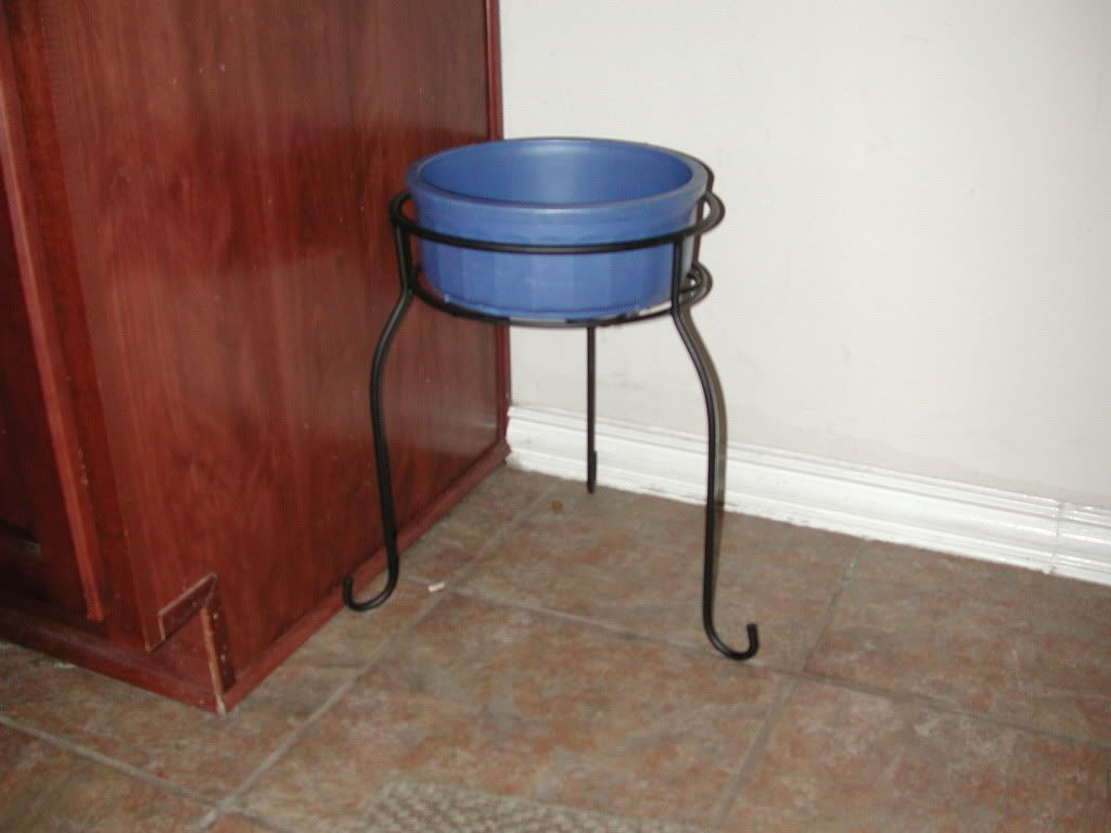 Use A Plant Stand For Dog Bowl Standscheaper Than Buying Actual Dog Bowl