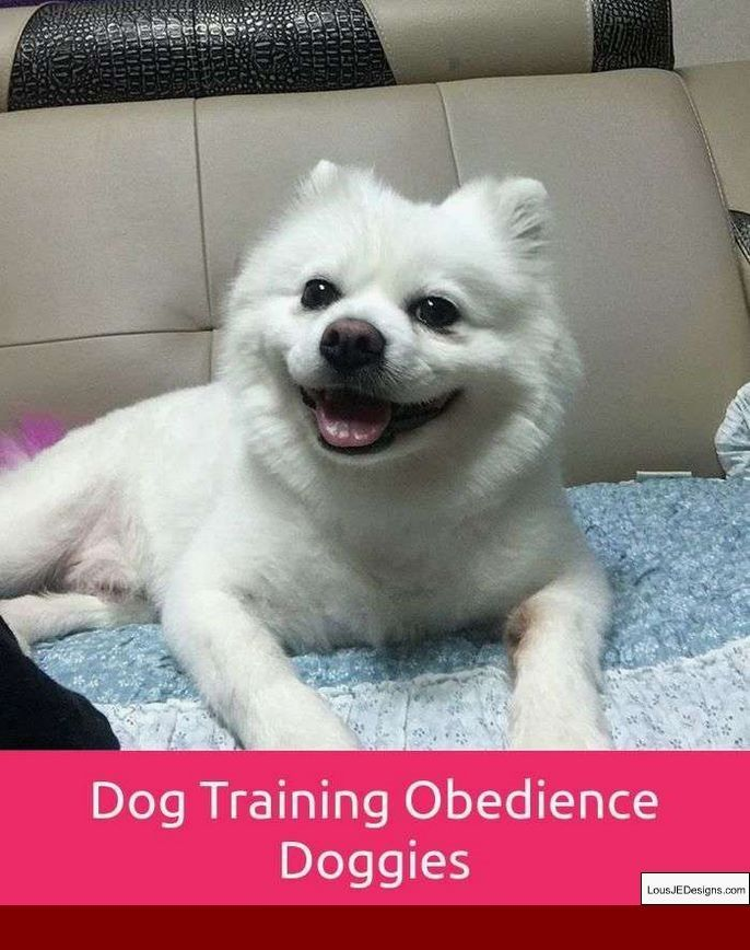 How To Train A Dog To Stay Near You Off Leash And Pics Of Dog