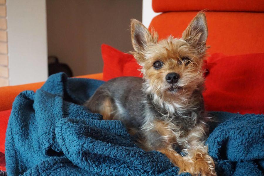 An English Speaking Vet In Vienna Dog Friends Pet Travel Vets