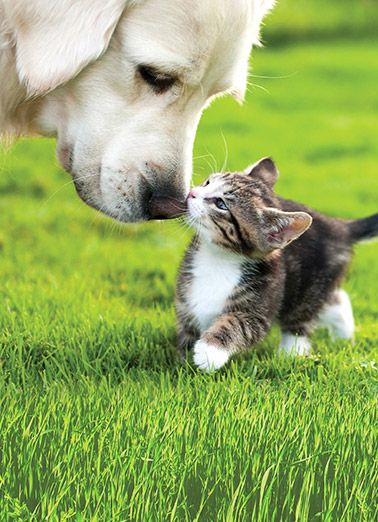 Funny Card Friends Cute Animals Dogs Cats Kiss Fuzzy Cute