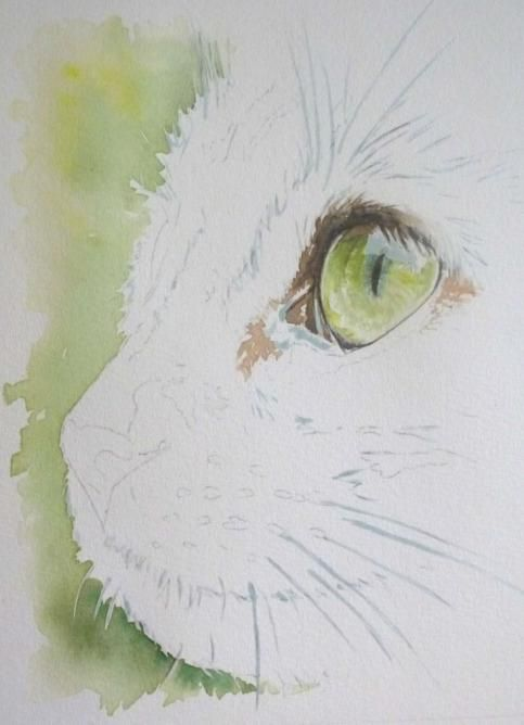 Realisation Pas A Pas D Une Aquarelle Illustration De Chat