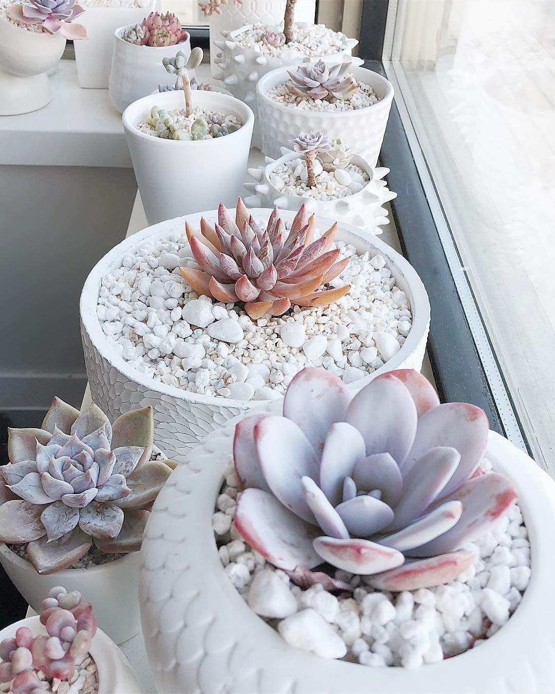 65 Simple Succulent Diy Ideas For 2019 #plantingsucculents
