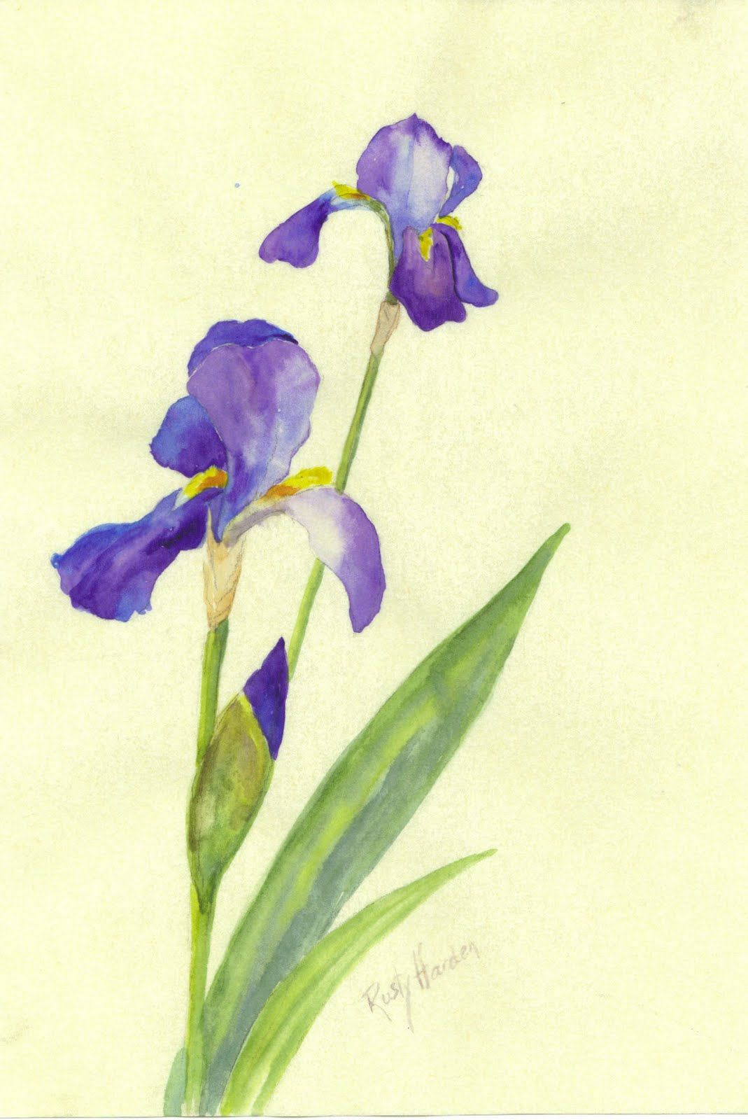 Rusty Harden Sold Three Floral Paintings Iris Painting Simple Watercolor Flowers Floral Painting