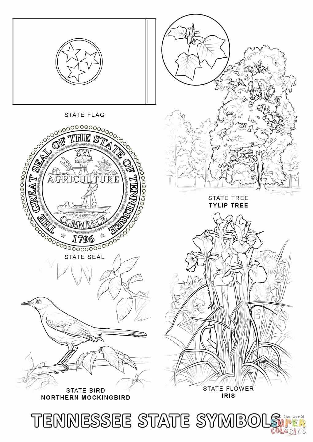 Florida State Flower Coloring Page Di 2020
