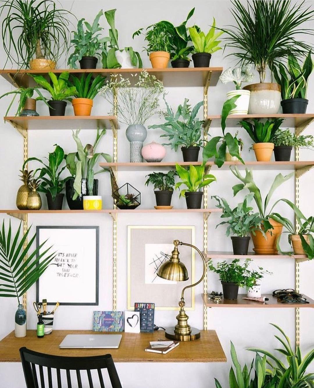 Tips For Indoor Gardening: Desk Goals #houseplants