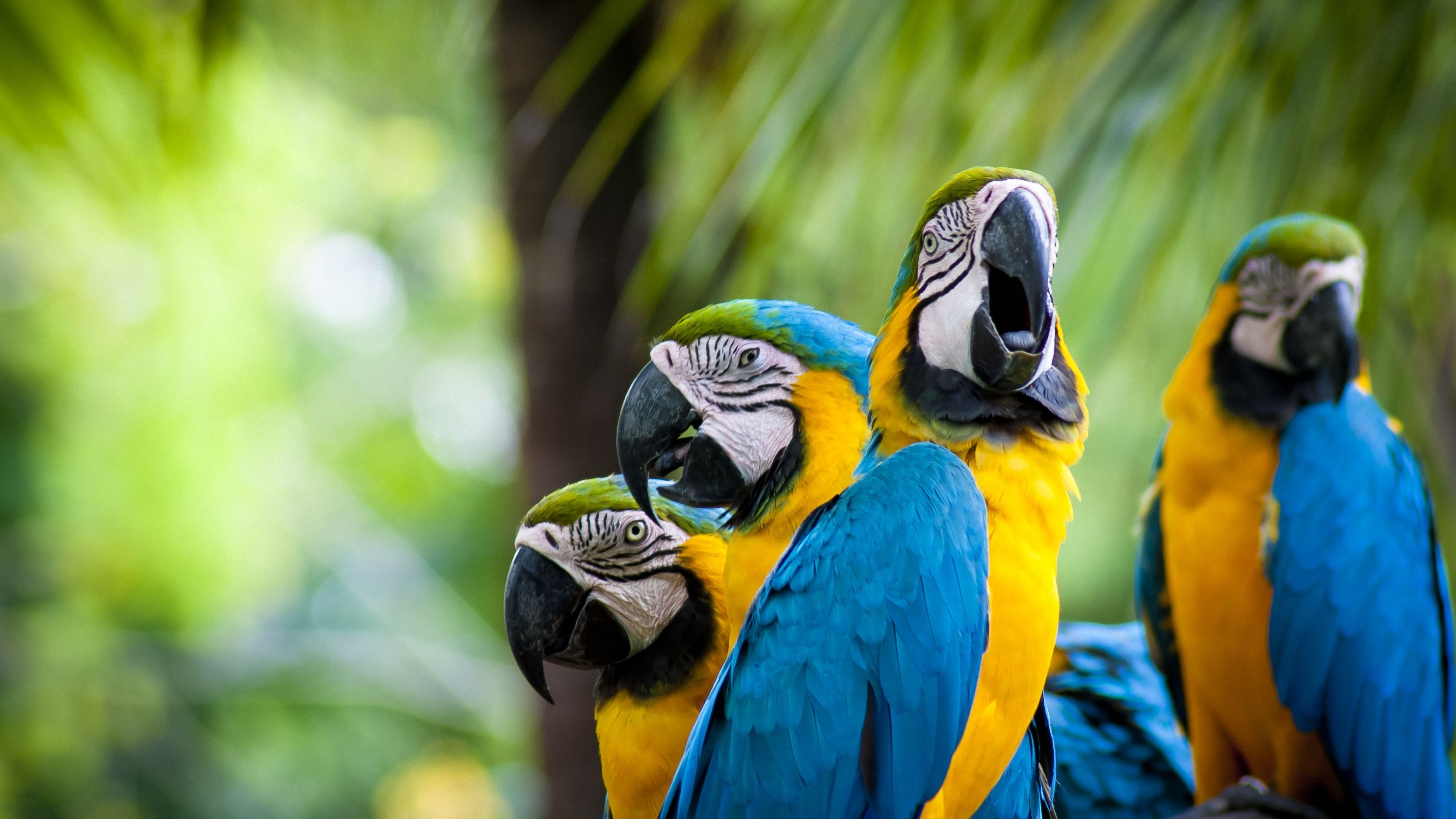 Birds 4k Wallpaper Beautiful Macaw Beautiful Birds Parrot