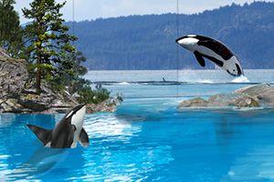 A Vision for SeaWorld   SeaWorld Cares