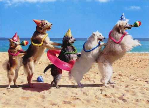 Dog conga birthday card modern provisions funny cards dog conga birthday card modern provisions bookmarktalkfo Gallery