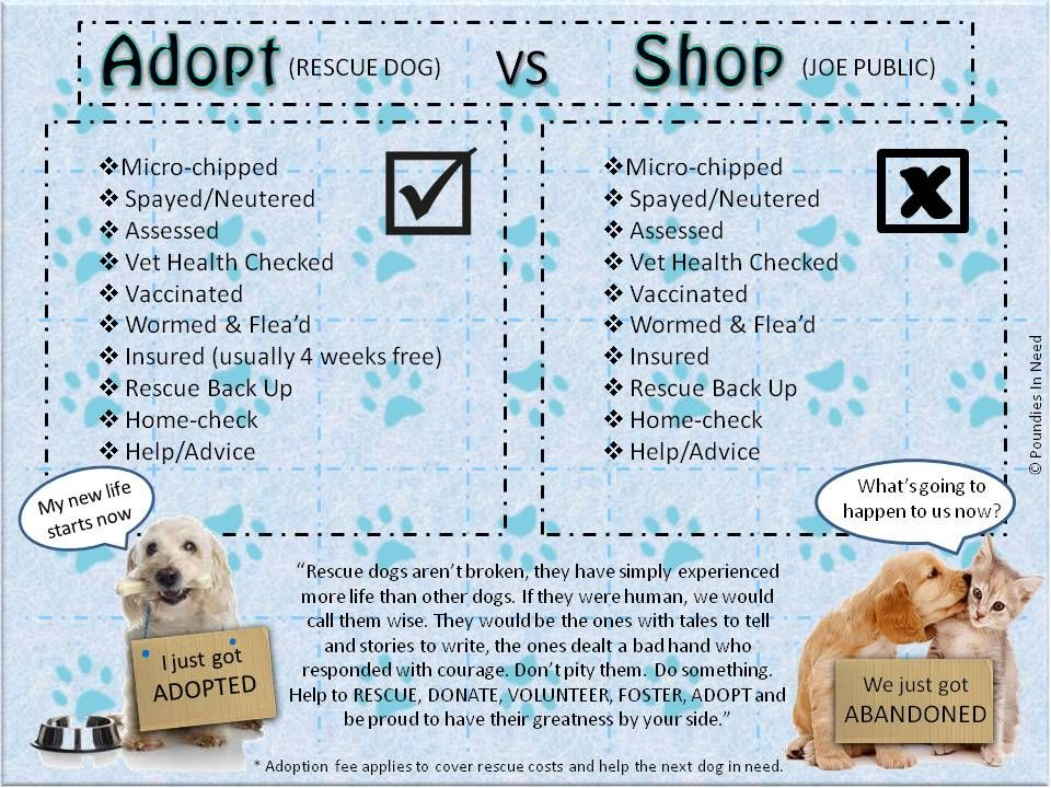 Adopt Dont Shop Health Check What Is Life About Adoption