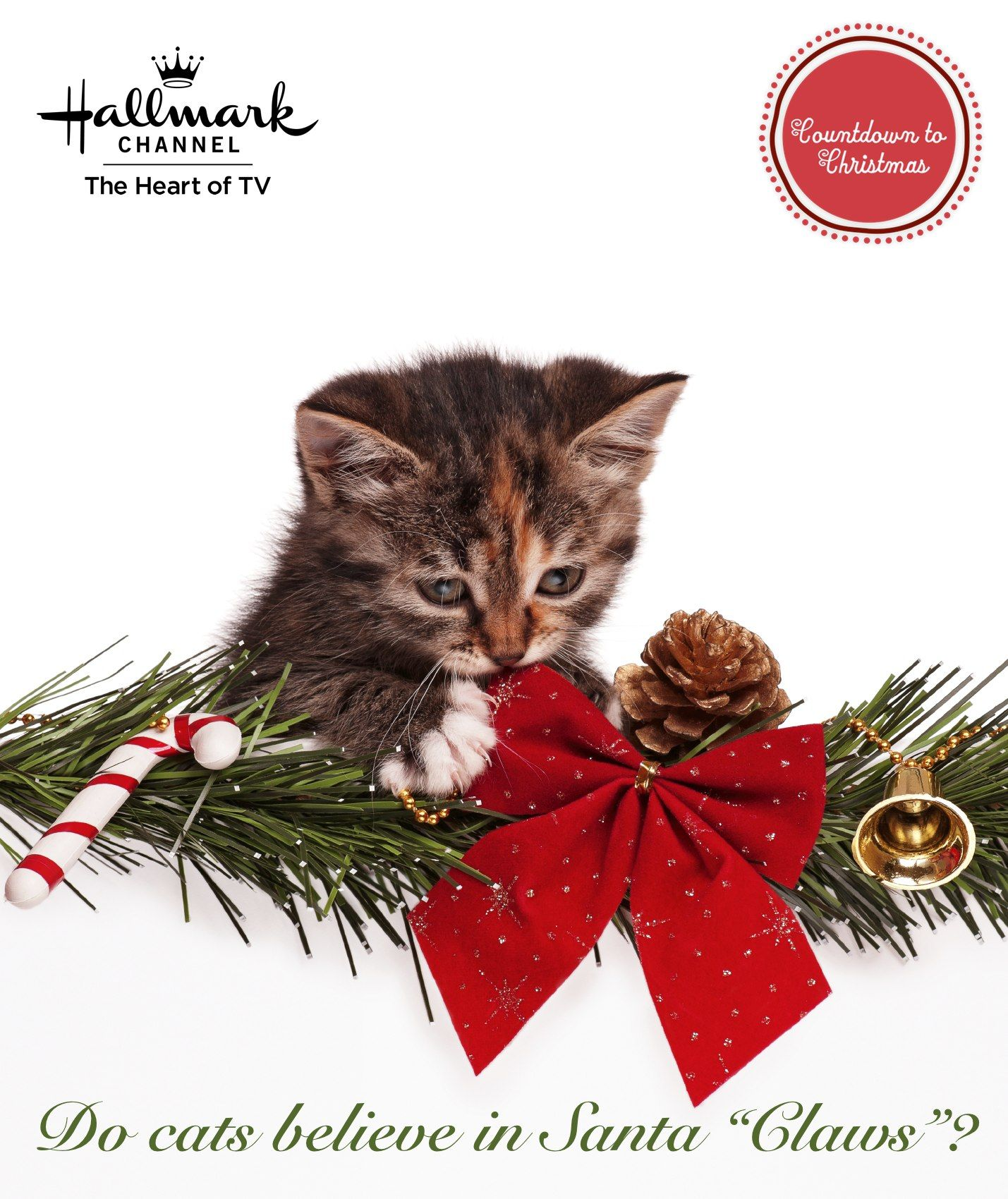 "Do cats believe in Santa ""Claws""? CountdownToChristmas"