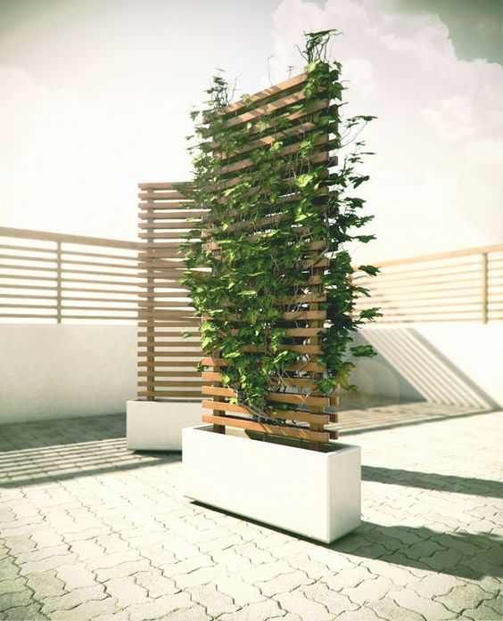 Imgur Post – Imgur #sichtschutzpflanzen