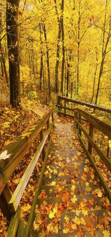 Down the Stairs of Fall - Shot looking down staircase at Clifty Falls State Park in Madison Indiana by Bernie Kasper