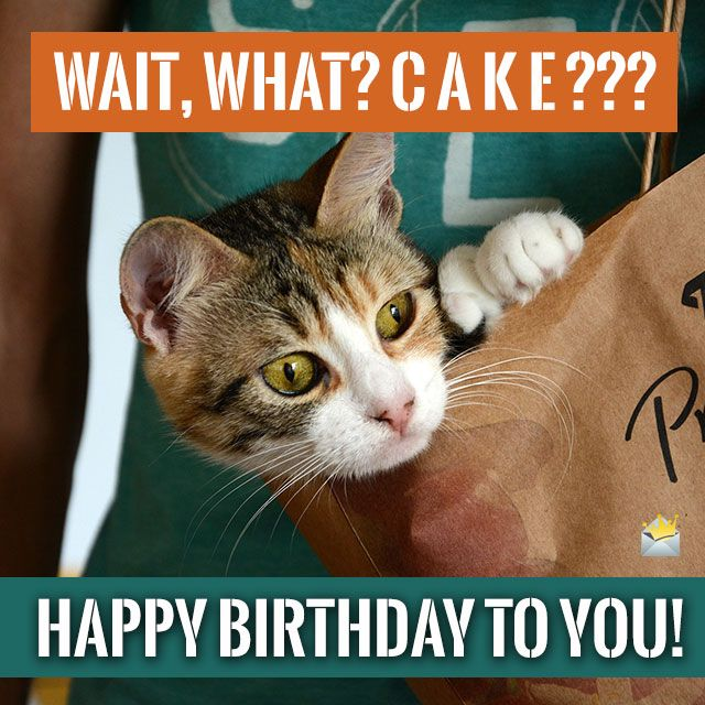 Have A Wild Birthday With Images Happy Birthday Meme
