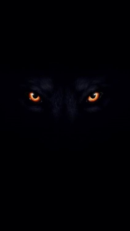 Ladyluxury Golden Eyes Wolf Eyes Wolf Wallpaper Scary Eyes