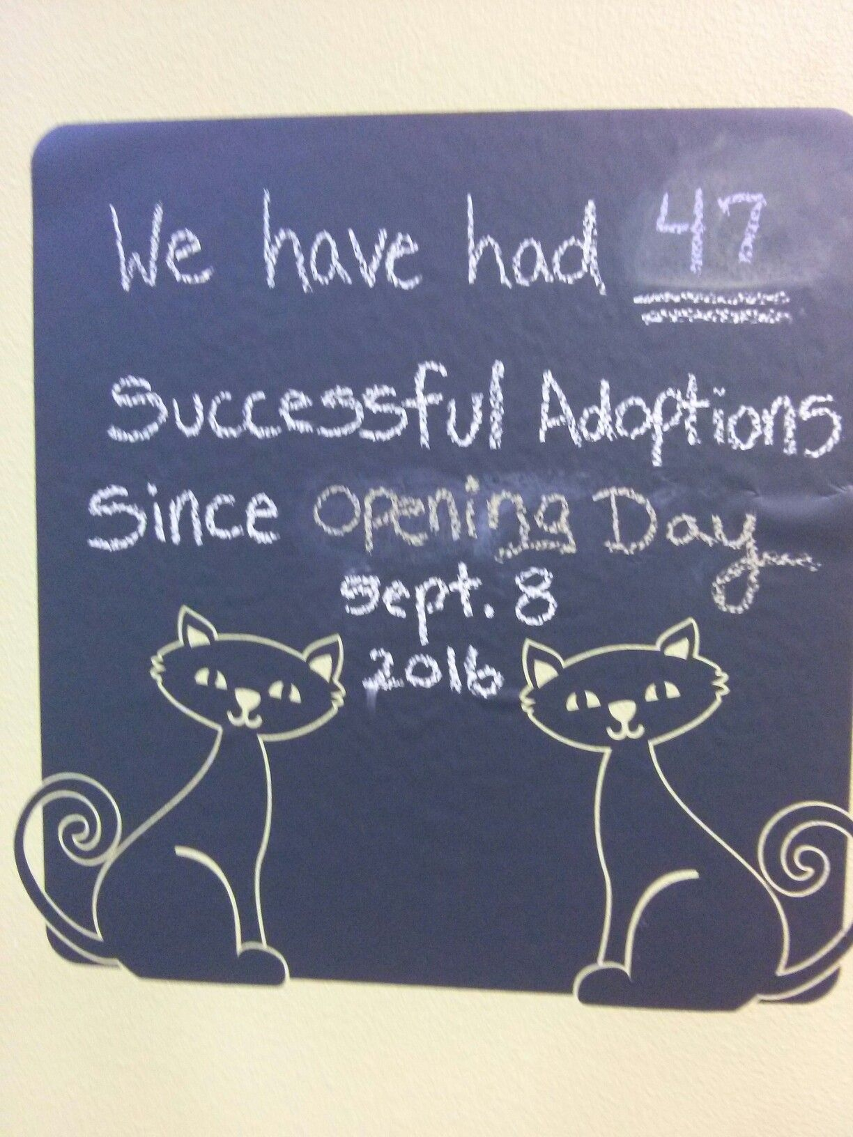 47 Adoptions And Counting Orlando Fl Cat Cafe Pet Cafe Cat Cafe Kitty Cafe