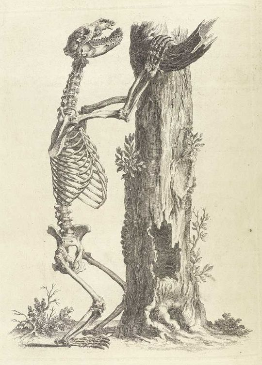 Accuracy And Elegance In Cheseldens Osteographia 1733 Public