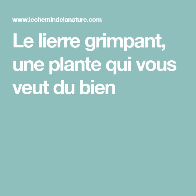 Le lierre grimpant, une plante qui vous veut du bien