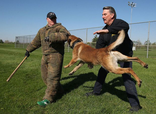 Top Dog Jostes Among Most Respected K 9 Trainers In U S Dogs