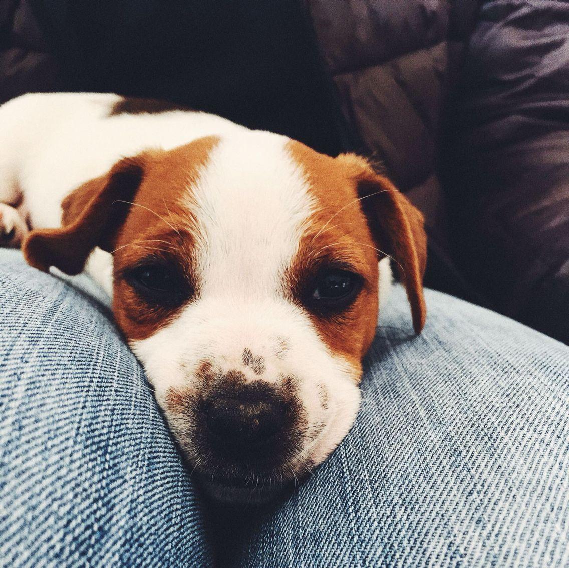 Ettore #dog #doggylove #animals