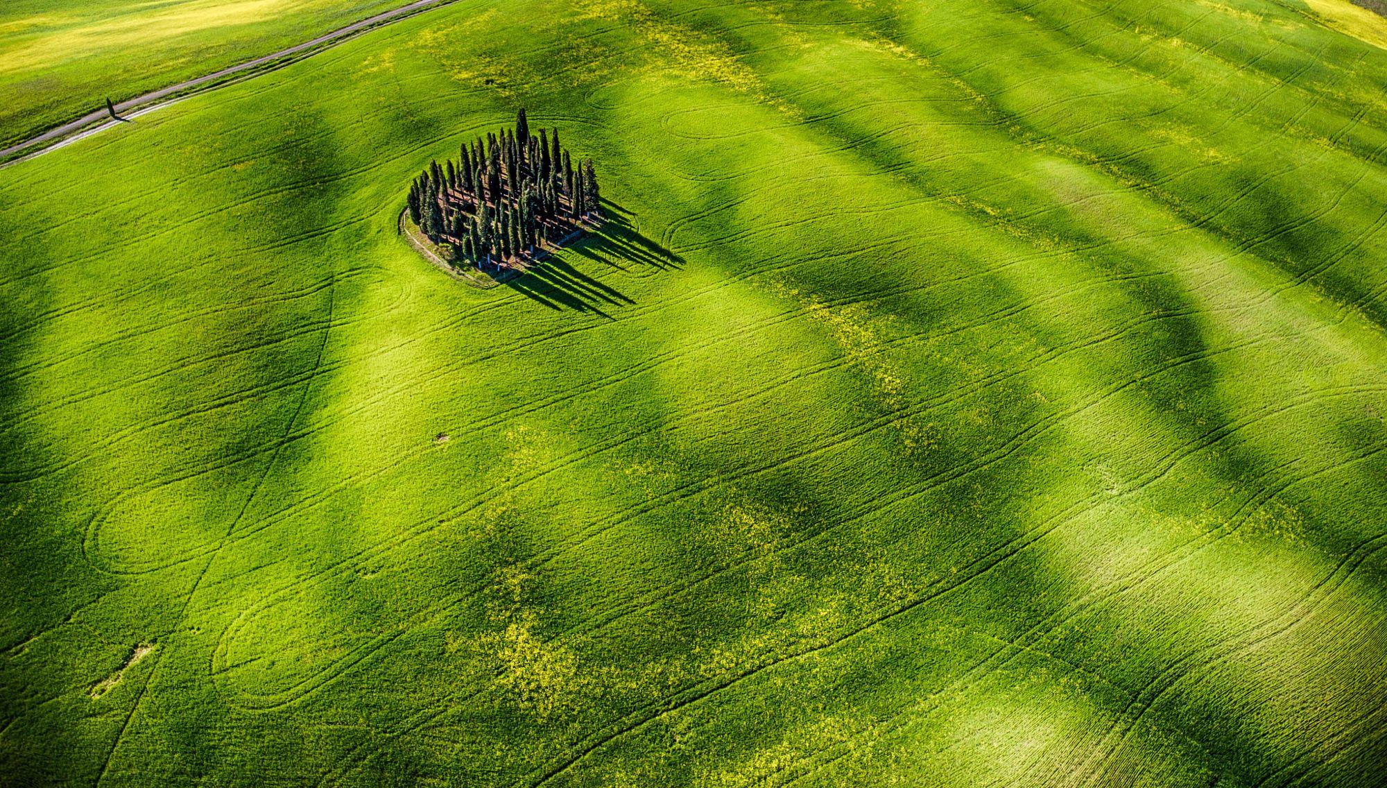 G R E E N A grass in Tuscany. Green grass I think.