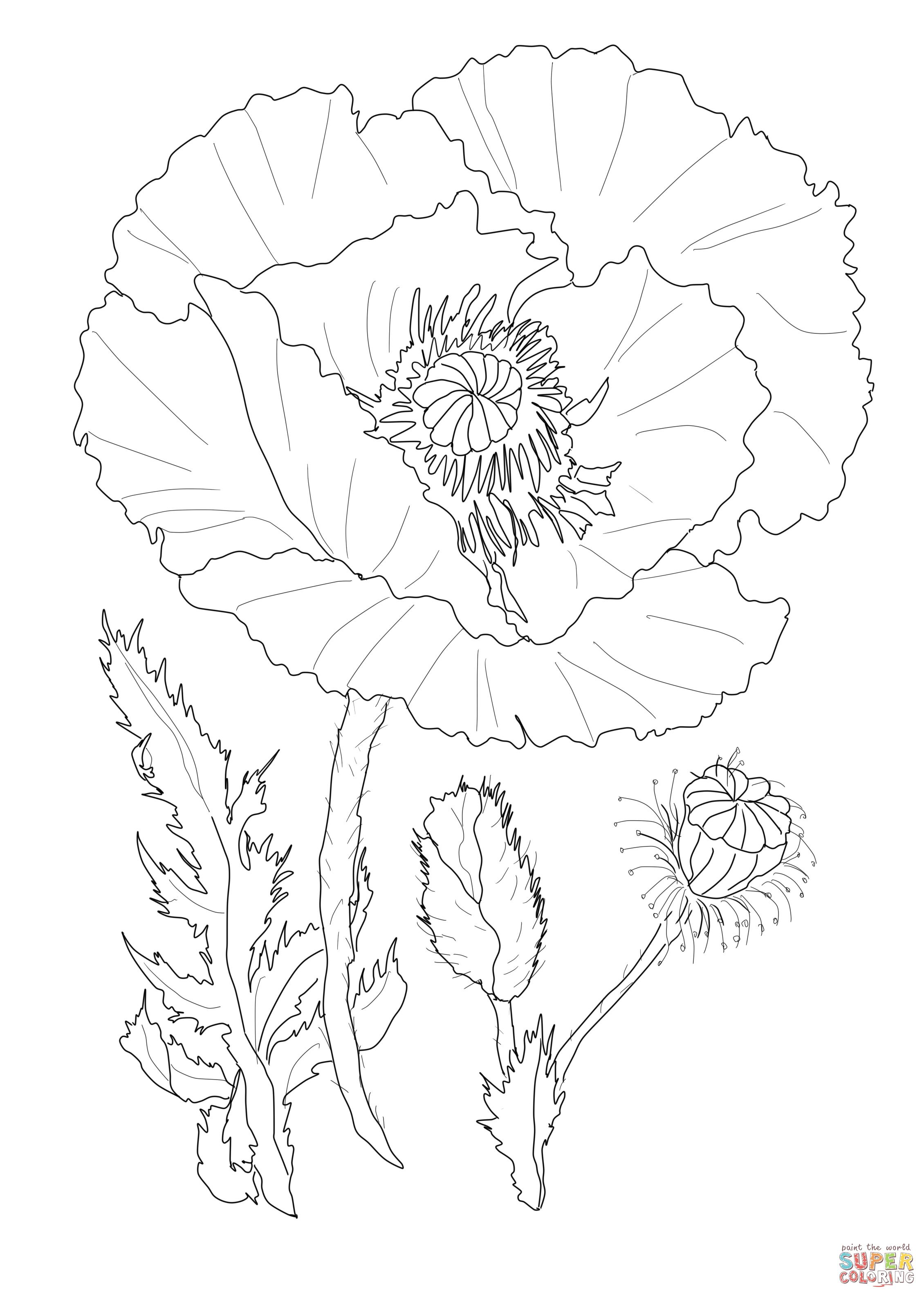 Poppy Flower Coloring Page Supercoloring Coloring Book