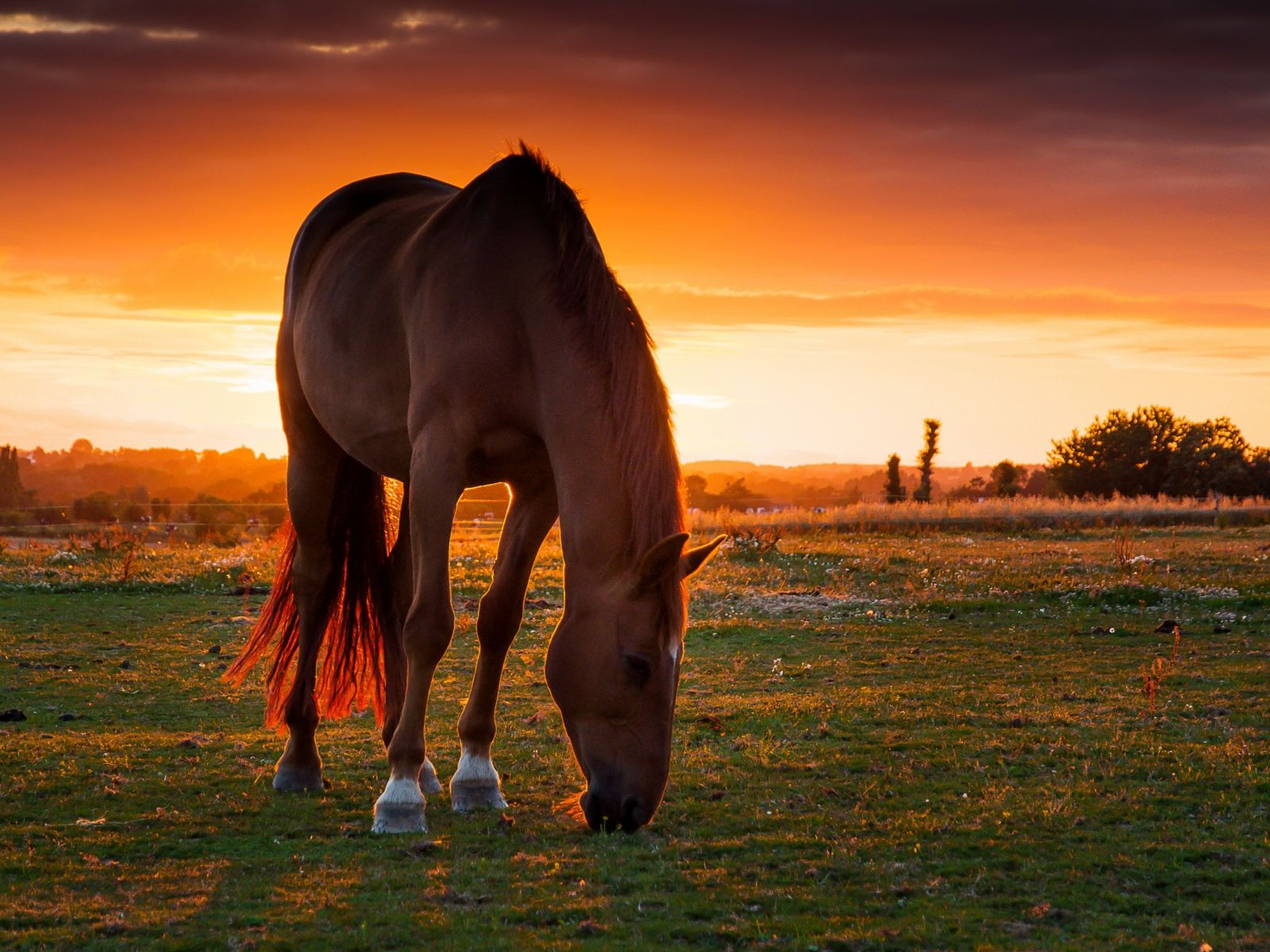 Must see Wallpaper Horse Landscape - 9d0a6106114d8fb246d798bb22983a5a  You Should Have_366320.jpg