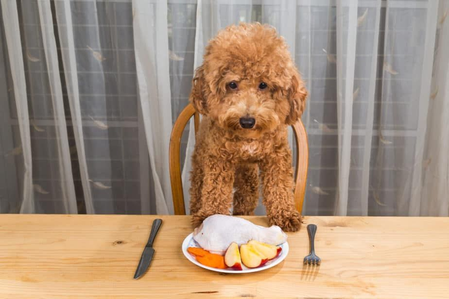 Why Does My Poodle Have Bad Breath? in 2020 Diabetic dog